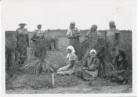 ajalugu nisu