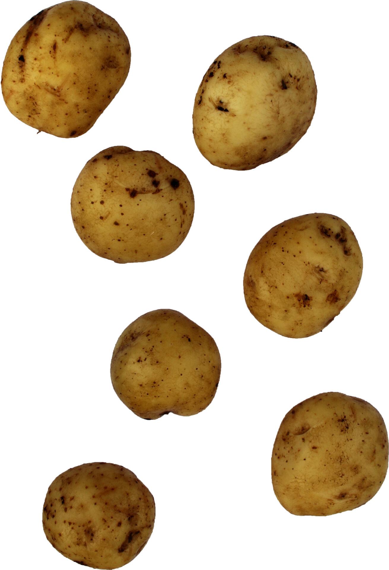 Anti kartul kartulisort