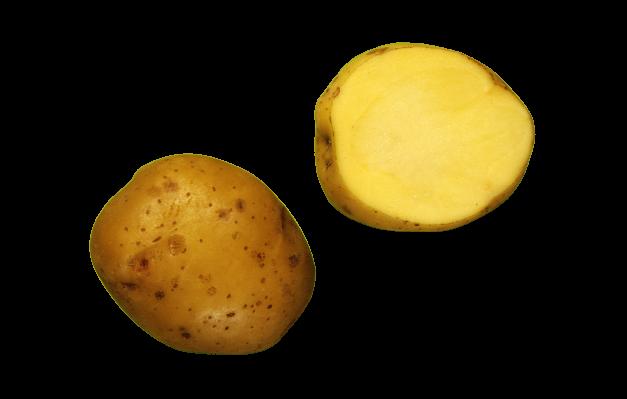 Ants kartul kartulisort