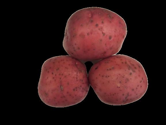 maret kartul keskvarajane