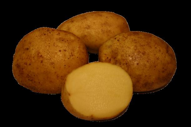 reet kartul kartulisort