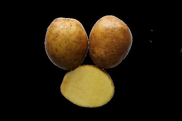 tiina kartul kartulisort