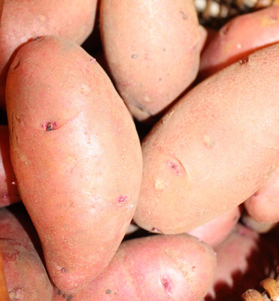 endla kartulisort kartul